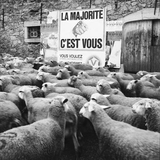 moutons-de-panurge.jpg