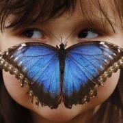 Papillon sur le nez